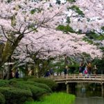 Japan's Top 100 Cherry Blossom Spots in Chubu Region