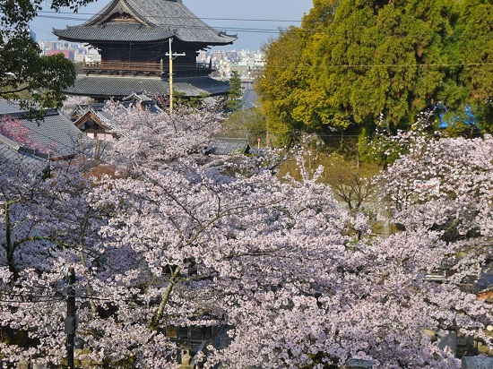 20150216-285-13-kyoto-Cherry-blossoms