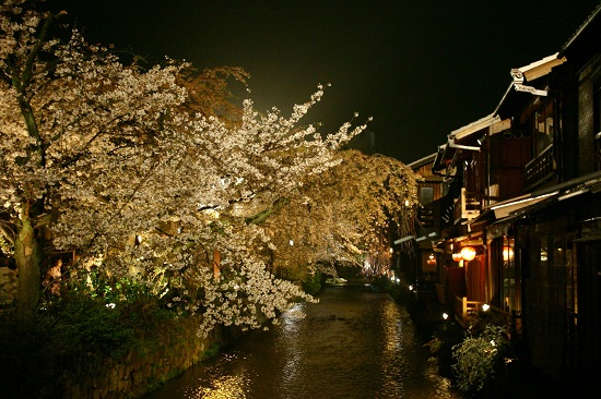 20150216-285-21-kyoto-Cherry-blossoms