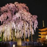 Popular 50 spots for cherry blossom viewing in Kyoto. [vol.2]