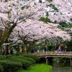 Japan's Top 100 Cherry Blossom Spots in Chubu Region