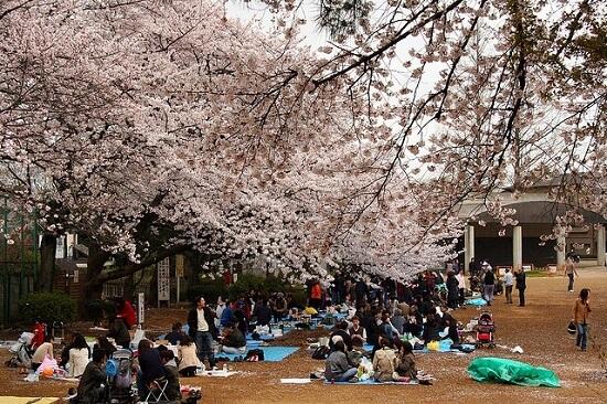 20150220-289-16-tokyo-Cherry-blossoms