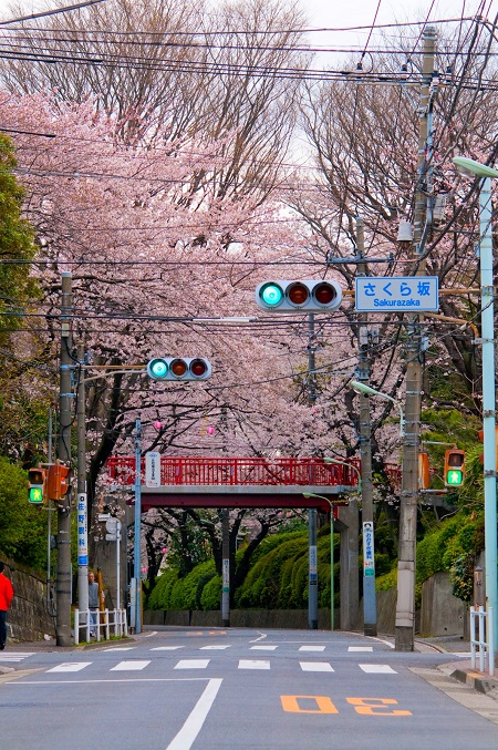 20150220-289-17-tokyo-Cherry-blossoms