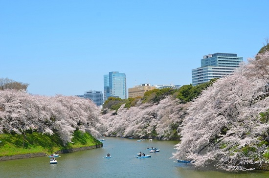20150220-289-19-tokyo-Cherry-blossoms