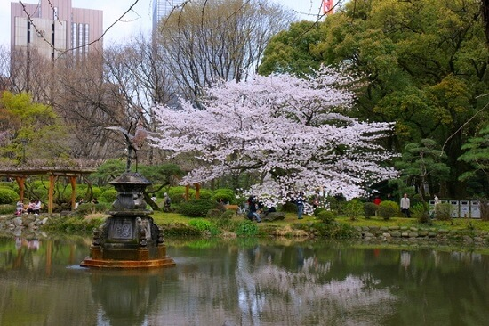 20150220-289-20-tokyo-Cherry-blossoms
