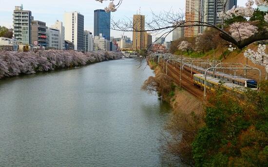 20150220-289-21-tokyo-Cherry-blossoms