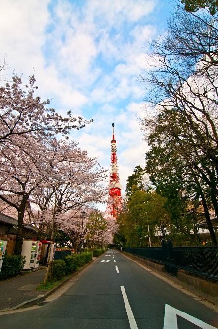 20150220-289-26-tokyo-Cherry-blossoms