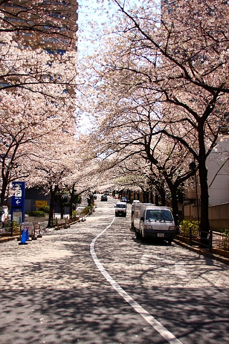 20150220-289-27-tokyo-Cherry-blossoms