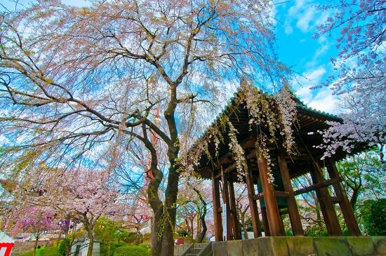 20150220-289-28-tokyo-Cherry-blossoms