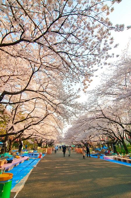 20150220-289-29-tokyo-Cherry-blossoms