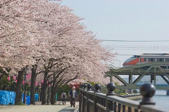 20150220-289-30-tokyo-Cherry-blossoms