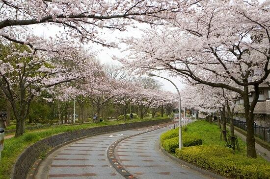 20150220-289-37-tokyo-Cherry-blossoms