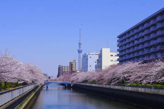 20150220-289-38-tokyo-Cherry-blossoms