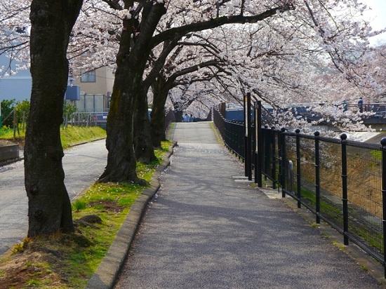 20150220-289-42-tokyo-Cherry-blossoms