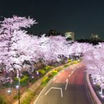 Popular 50 spots for cherry blossom viewing in Tokyo. [vol.1]